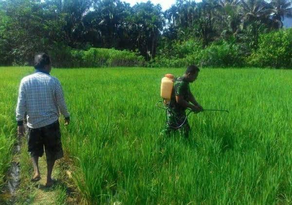 Di Desa Timbang Lawan, Sertu Tengku Ibrahim Lakukan Penyemprotan
