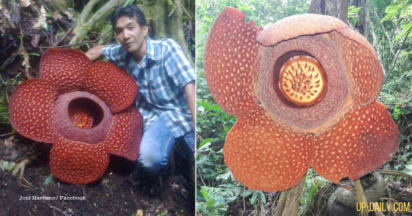 Time-Lapse Photos Of Blooming Rafflesia Flower Goes Viral