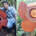 Time-Lapse Photos Of Blooming Alien-Like Rafflesia Flower Goes Viral