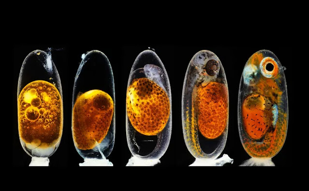 best science photos of 2020 11