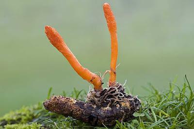 Cordyceps mushroom cultivation training in Amravati