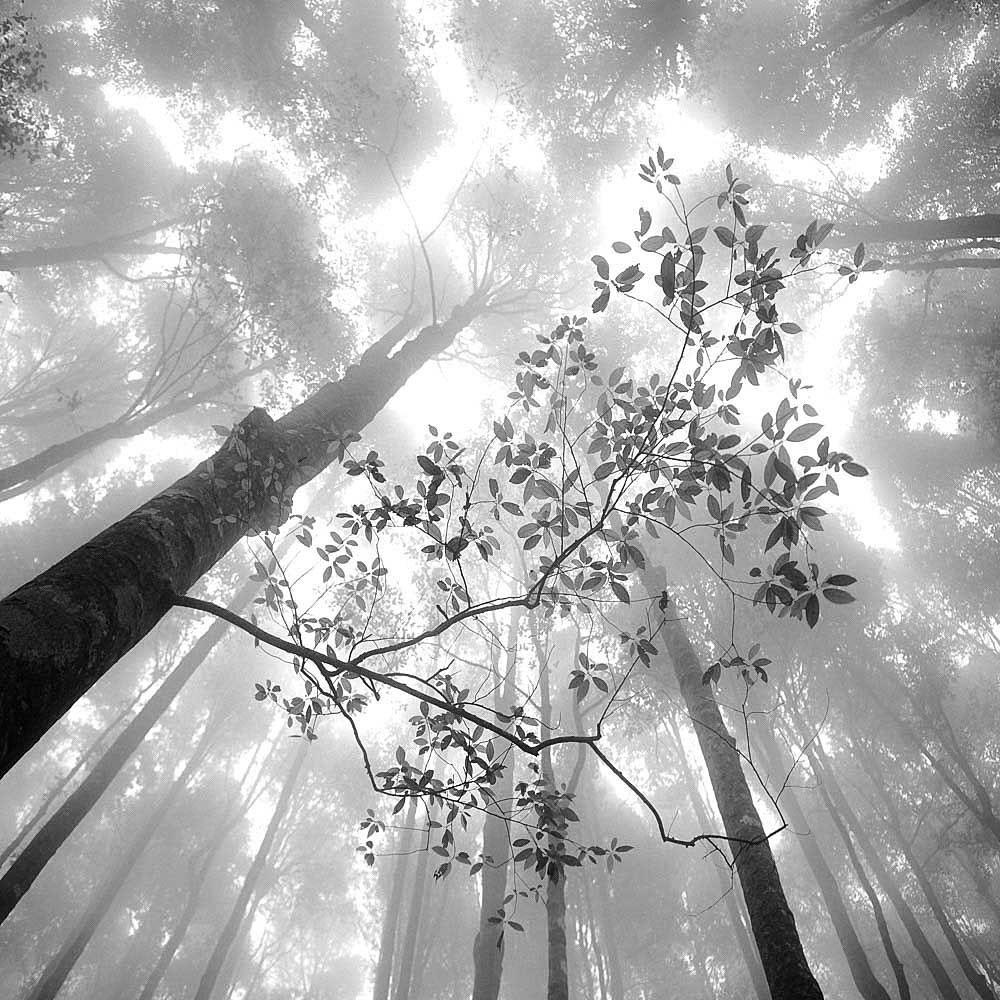 Fotografi Landscape  hutan mistis KKN di Desa Penari