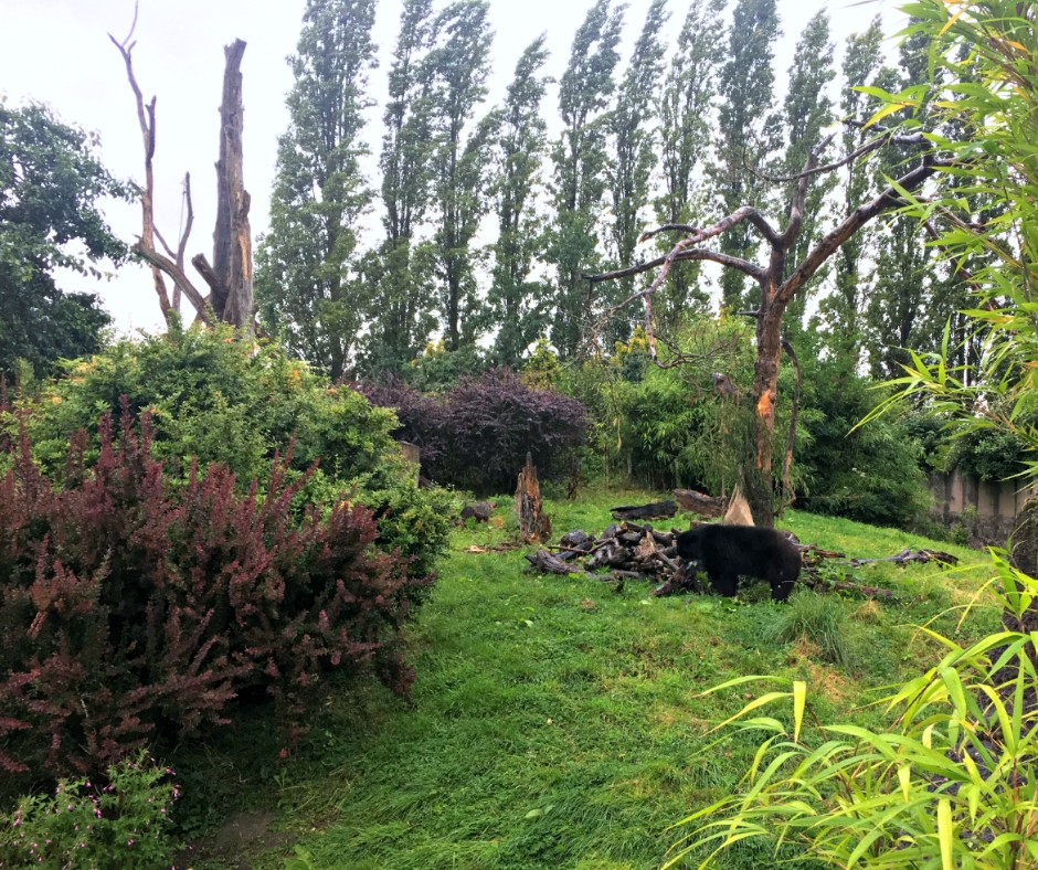 A bear hides in the scene, surrounded by trees and grass.