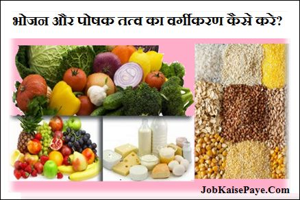 Classification of food and nutrients