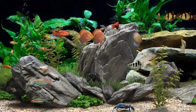 Daftar 7 Jenis Ikan Hias yang Cantik Tapi Murah