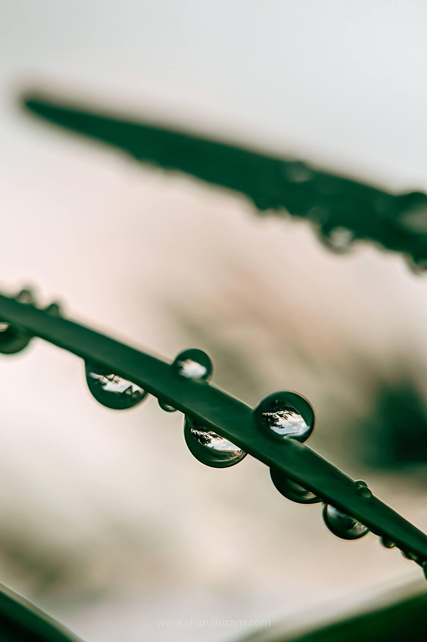 Gambar Titisan Embun (Droplets Macro Photography)