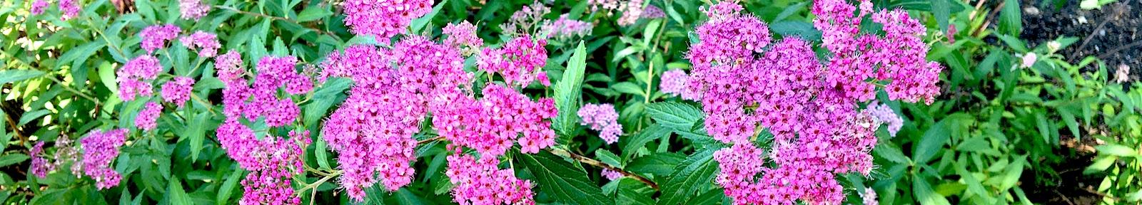 Цветы для Божией Матери, ради иконы Ея Акафистной Хиландарской.
