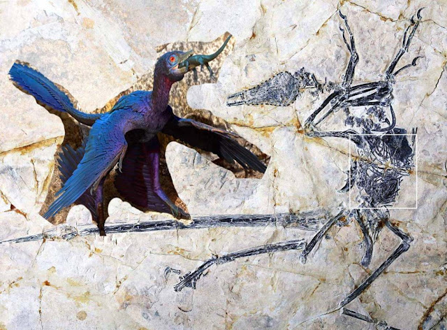 Whole Lizard Discovered Inside 120 Million-year-old Dinosaur's Stomach