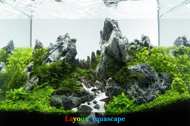 10 Rekomendasi Layout Aquascape Terbaik