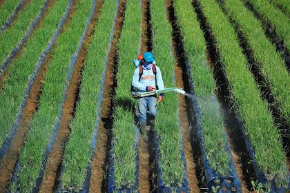 Lowongan PT Kuantan Singingi Agro Utama Pekanbaru Mei 2021