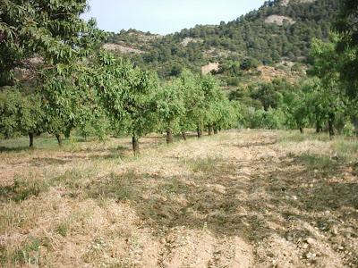 La pileta, camino, pantano de Pena, embalse, finca, almendros, olivos 25