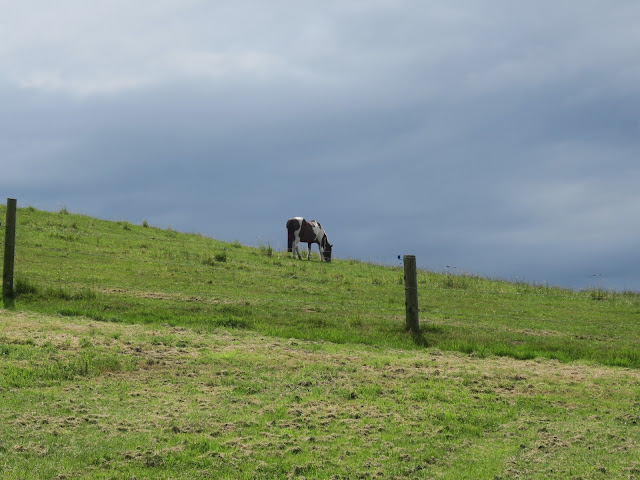 Brown and white horse (or pony?) on grassy hill between bouts of rain.