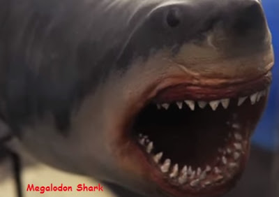 ilustrasi ikan hiu megalodon