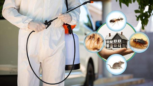 شركة المملكة  Hytech-expert-pest-control-hazaribagh-pest-control-services-764w9bjhwt