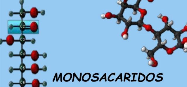Monosacaridos y biologia