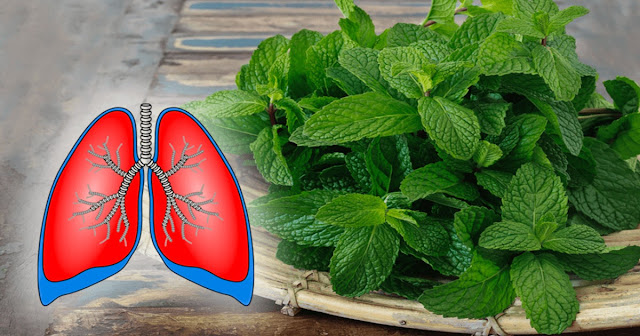 7 Plants To Clean Your Lungs And Fight Against Asthma
