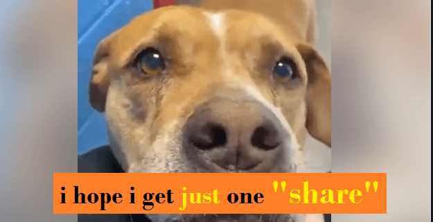 Senior saved from kids kicking her and now she's on the list for euthanasia