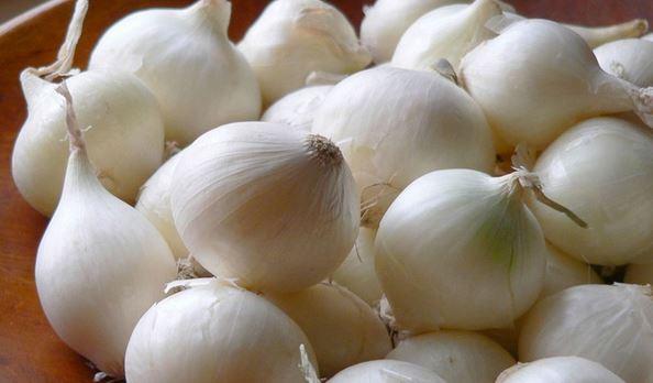 Manfaat Bawang Putih Manfaat Bawang Putih Tunggal Belajar Tanaman Obat