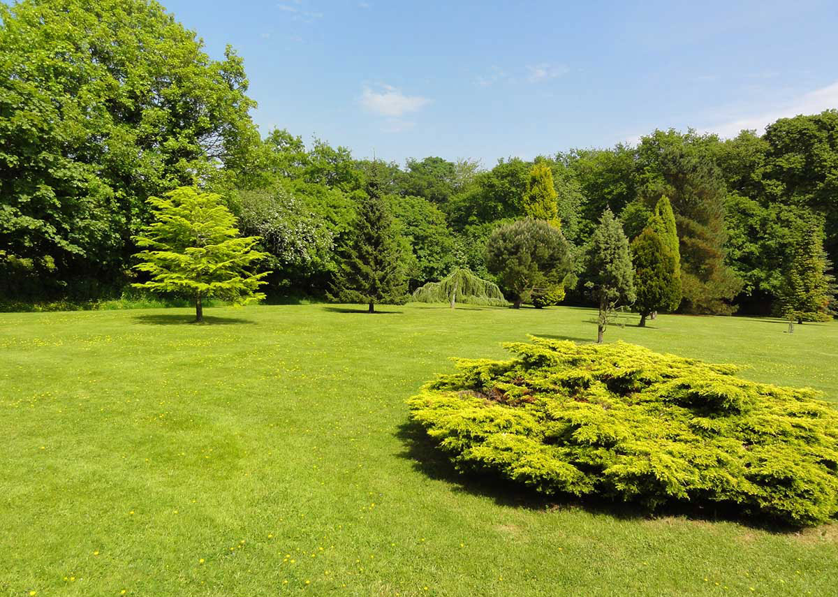 Deceptively spacious Pinetum Gardens in Cornwall