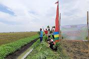 Petani Kangkung Demak Panen Raya Bersama BMH
