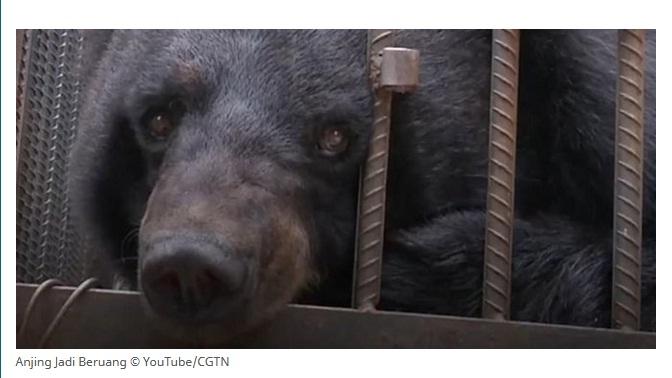 Kecilnya Anak Anjing Udah Gede Jadi Beruang