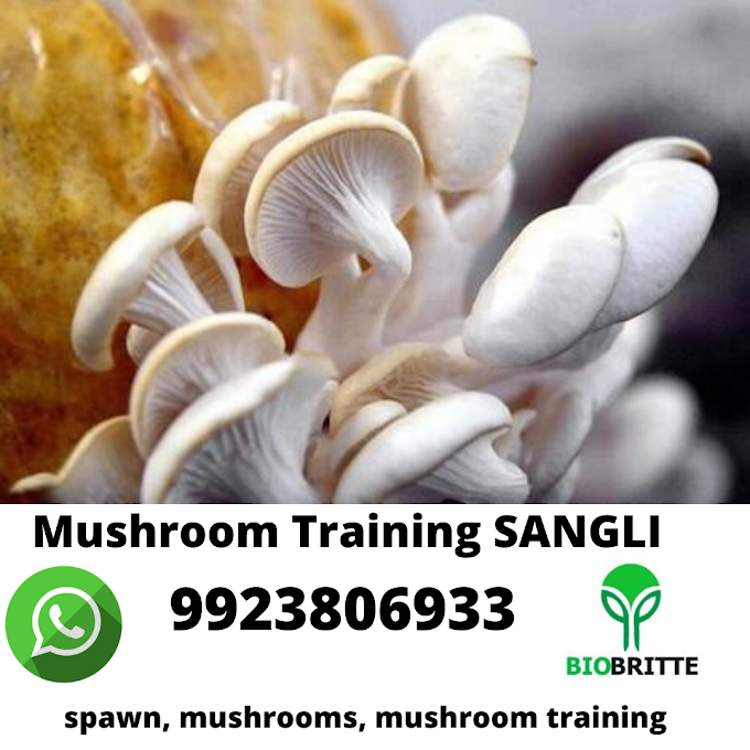 Mushroom Training in Sangli