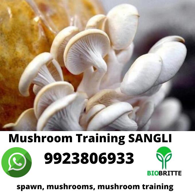Mushroom Training in Sangli