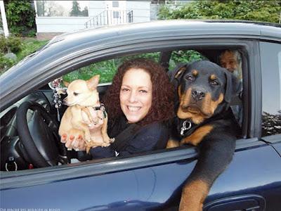 Lustiges Bild - Auto fahren mit großem und kleinem Hund witzig