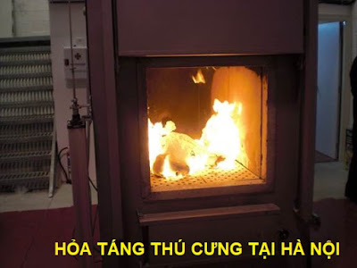 Dịch vụ hỏa táng thú cưng tại Hà Nội