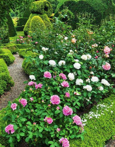 Famous English Gardens Visit: Topiary Garden At Levens