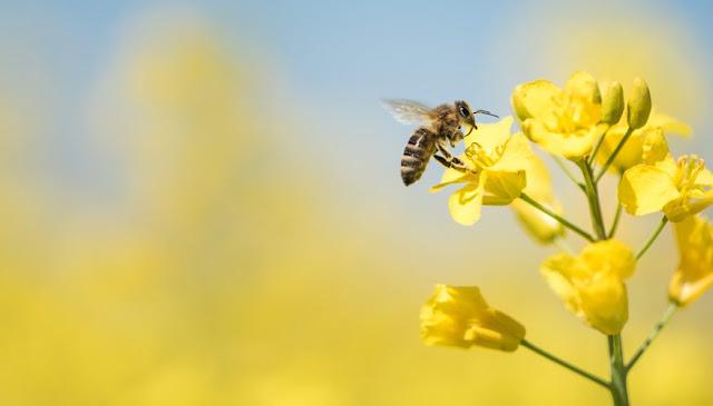 Πορεύθητι πρὸς τὴν μέλισσαν αλλά γε πρός τήν μέλισσαν άπελθε...