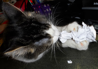 Anakin The Two legged cat Attacks paper