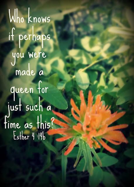 God's word, bible verse, inspiration, purpose, Queen Esther, wildflower,http://bec4-beyondthepicketfence.blogspot.com/2016/06/sunday-verses_11.html