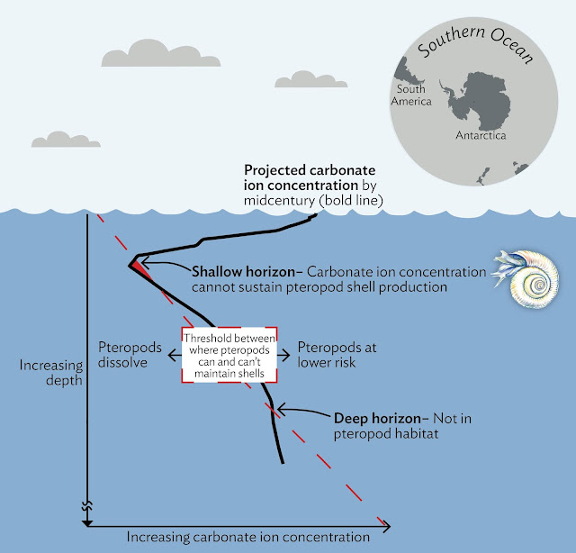 Southern Ocean acidification puts marine organisms at risk