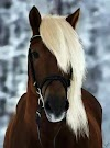 Beautiful Hairstyle Horse