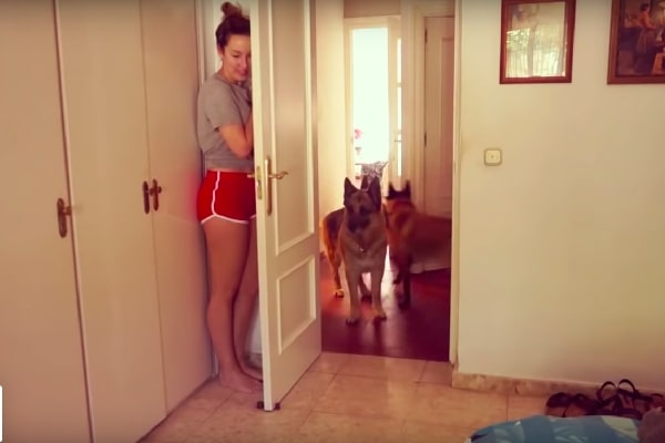 Owner Plays Adorable Game Of Hide As Well As Seek With Three Pet Dogs