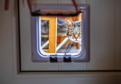 tabby cat looking through an open cat flap