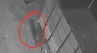 সিসিটিভিতে ধরা পড়ল বাঘ জাতীয় জন্তুর ছবি, জঙ্গলমহলের বাঘ আতঙ্কে গৃহবন্দী হুগলির গ্রাম 2