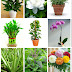Plants That Create Positive Energy In Your Home