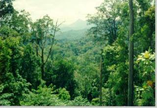 hutan wanacala