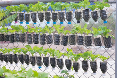 sampah plastik yang disulap jadi pot tanaman