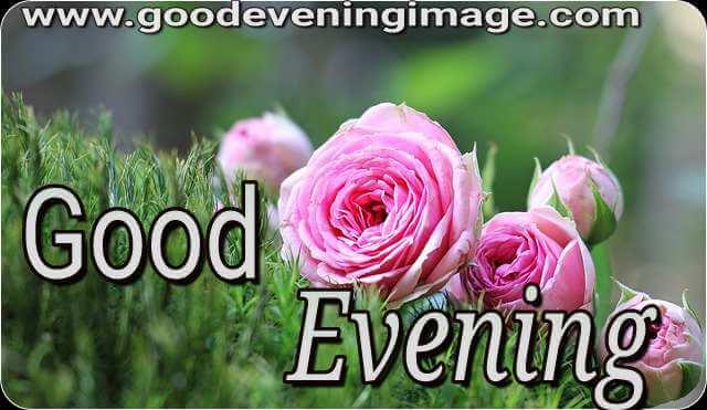 good evening rose images download
