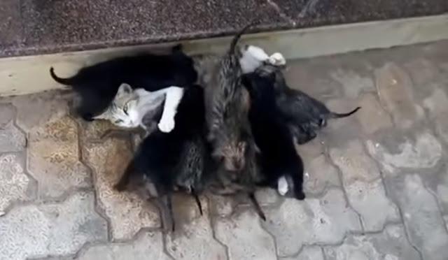 Прохожий заметил на улице мокрых щенков, которых кормила кошка