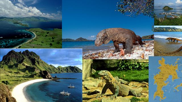 Pulau Komodo Tempat Wisata Terpopuler dan Terbaik Di Indonesia