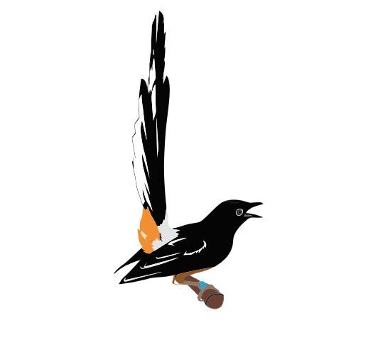 design logo contest bird song