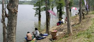 umpan ikan mas di danau