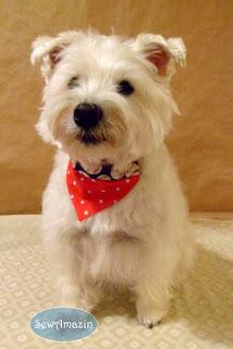All Star Over the Collar Dog Bandana