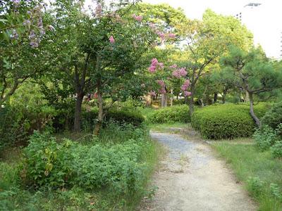 大阪城公園 サルスベリの花