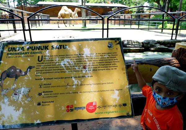hewan yang ada di kebun binatang surabaya
