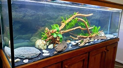 Oscar Fish Breeding Aquarium Setup